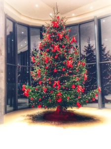 6 m Christbaum by Christbaumdealer.de